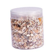 Natural ShellsBoxed - Sea Shells for DIY Jewellery Craft Shell Wedding Favor