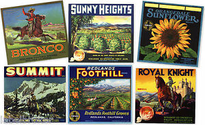 6 GENUINE CITRUS CRATE LABELS VINTAGE REDLANDS CALIFORNIA 1930-1940S COLLECTION