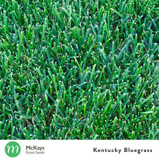 McKays Kentucky Bluegrass Grass Seed - 3kg - Lawn Seed Free Postage