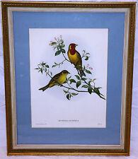 Euspiza Luteola Beutiful John Gould Fine Vintage Lithograph Asian Bird Art Print