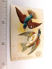 Lovely Arm & Hammer White-Bellied Swallow Bird Victorian Trade Card F47