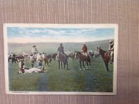 Vintage Postcard Cowboys Throwing a Calf Bloom Bros Quality Line Unposted