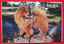 Rare Collectible ~ Chow Chow Issue ~ Dog Fancy Magazine ~ November 1983 #