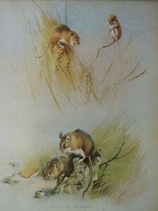 Tierwelt Aufdruck ~ Harvest Maus ~ Thornburn
