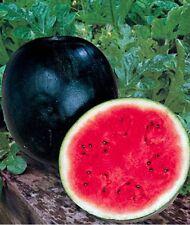 VEGETABLE - GIANT BLACK - WATER MELON SUGAR BABY - 110 seeds - Citrullus lanatus