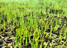 Hard wearing grass seed with fertiliser- High quality lawn seed.100g - 2kg packs