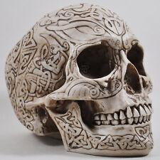 Celtic knot Ossa Teschio Statua Scultura altamente dettagliato by Design clinica 16034