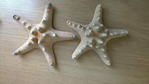 SET OF 2 Real Natural Knobbly Starfish 3-4 inch Nautical Item Home Accessory