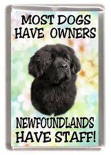 """Newfoundland Dog Fridge Magnet """"Most Dogs Have Owners Newfoundlands Have Staff"""""""