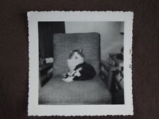 CAT SITTING ON CHAIR GLARING AT CAMERA Vtg 1958 PHOTO