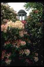 346051 Temple Among Flowers Kew Gardens England A4 Photo Print