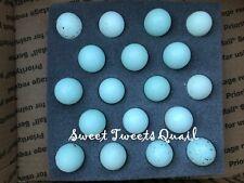18 Celadon Blue Coturnix Quail Hatching Eggs Free Shipping