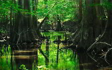 SOUNDS OF THE SWAMP CD, NATURAL SOUNDS, NATURE, FROGS, BIRDS, CRICKETS, RELAXING