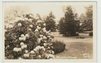 Unused Postcard Real Photo RPPC Rhododendrons Flowers