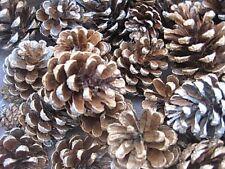 24 pine cones, silver & gold, Royal Deeside, NE Scotland UK grown, home decor