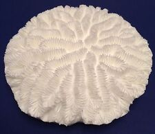 New Item! RARE Flat Bright White Brain Coral Replica -Aquarium Nautical Decor