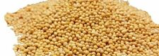 Mustard Seeds Yellow - Take the Taste Test - SPICESontheWEB
