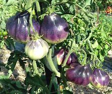 10 Tomato Seeds BLUE PEAR-(Sinaya Grusha) Ukrainian Heirloom Organic Vegetable
