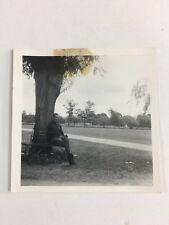 Vintage BW Real Photo #AZ: Man In Park Under Tree : Amputé