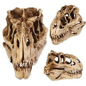 Resin Crafts Dinosaur Skull Fossil Teaching Skeleton Model Halloween Decoration