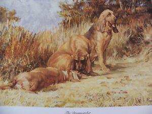 Bloodhound Print - Roger Inman - Ltd.Edn. 88/250
