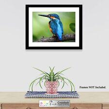 Kingfisher Print Beautiful British Wildlife Bird Photo Prints ONLY Wall Art A4
