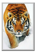 Tiger Poster Snow Silver Framed Ready To Hang Frame Free P&P