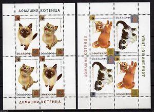 BULGARIA 2013 KITTENS DOMESTIC CATS ANIMALS   2  MINI SHEETS  MNH