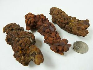 Prehistoric Turtle Dung Coprolite Fossil Poop 152 grams 3 piece lot