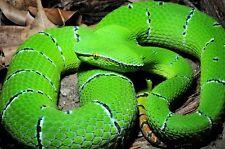 100% SYN-AKE® Anti-Aging Wrinkle BowTox Snake Venom 15ml