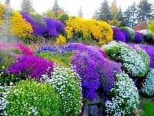 Seeds flowers Flower mix Alpine. Long-term original from Ukraine