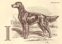 Irish Setter - Vintage Dog Print - 1954 Megargee