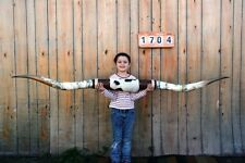 "STEER LONG HORNS MOUNTED 6' 11"" COW BULL SKULL TAXIDERMY LONGHORN LH1704"