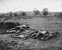 New 8x10 Civil War Photo: Dead in The Wheatfield after Battle of Gettysburg
