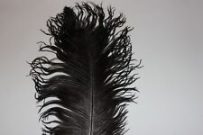 One natural black undyed drabs ostrich feather first grade 500-550MM (20-25 in)