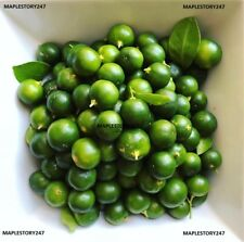 Calamansi Calamondin Lime SEEDS Organically Grown in California! Free Shipping!