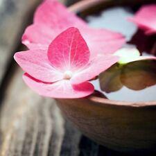 ZEN BOWL ART PRINT 12x12 motivational garden buddha flower photograph poster