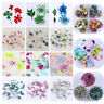 3D Nail Art Decoration Mixed Dried Flowers w/ Bottle Floral  Design Tips