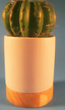 Project 62 Tabletop Arrangement Cactus For Indoor Decorative Use