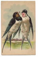 PAIR OF EUROPEAN SWALLOW Split Tail Birds LETTER  Embossed Postcard DB 1908