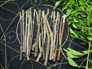Long Celtic Ogham Staves made with corresponding woods - Pagan, Wicca, Runes