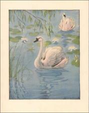 SWANS on the POND, LILIES by Milo Winter, vintage print, authentic 1921