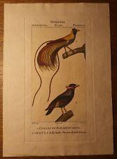 Vintage ornithological print by Pretre, hand-coloured