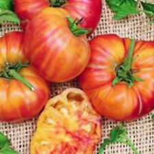 """Old German Tomato *Rare* *Heirloom* (50 Seed's)  """" FREE SHIPPING"""""""