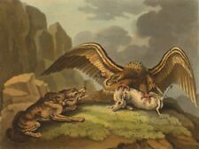 USA. Eagle and Wolf disputing their prize (Field Sports- Edward Orme)  1814
