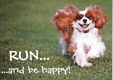 Run, and be happy Blenheim Cavalier King Charles Spaniels post card
