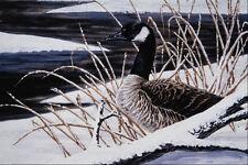 591062Canada Goose A4 Photo Print