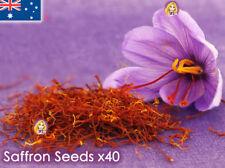 Saffron Crocus Sativus Seeds x40 Garden Flower Plant Seed Rare AUSTRALIA