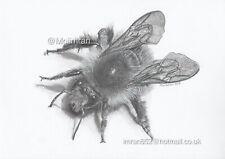 Drawing BumbleBee Bee Wildlife Animal Pencil Sketch Artwork Detailed Realistic