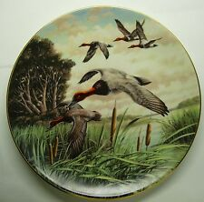 Canvasbacks In March By Km Michaelson Collector Plate
